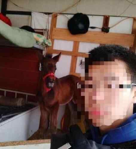 宿舍养鳄鱼 宿舍养了匹马 要骑着上学吗