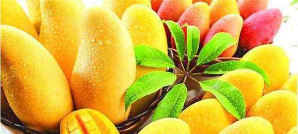 芒果卡路里 吃芒果可以减肥吗 芒果含糖高热量高不能减肥