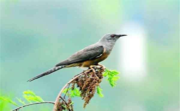 鸟的叫声 十大最恐怖的鸟 这些鸟叫声让人相当害怕恐惧