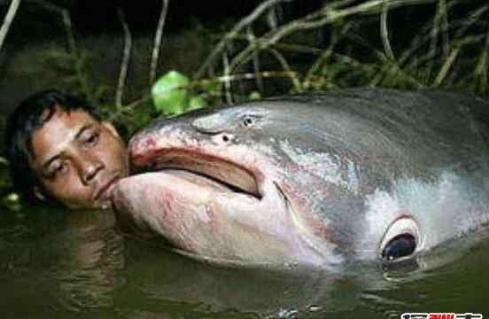 食人鲳鱼 食人鲳咬人视频触目惊心,将人吃的干干净净只剩一堆白骨