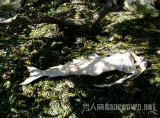 澳大利亚发现美人鱼 世界上真有美人鱼吗 美人鱼木乃伊面目狰狞实在恐怖