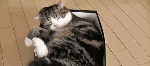 猫咪肚子一抽一抽的 猫肚子一抽一抽的要反胃吐